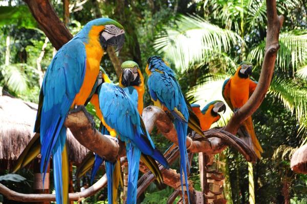Erleben sie farbenfrohe Papageien im Vogelpark Iguazu
