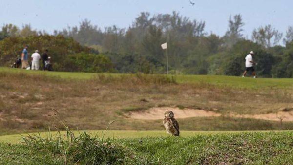 Eulen beobachten still die Golfspieler